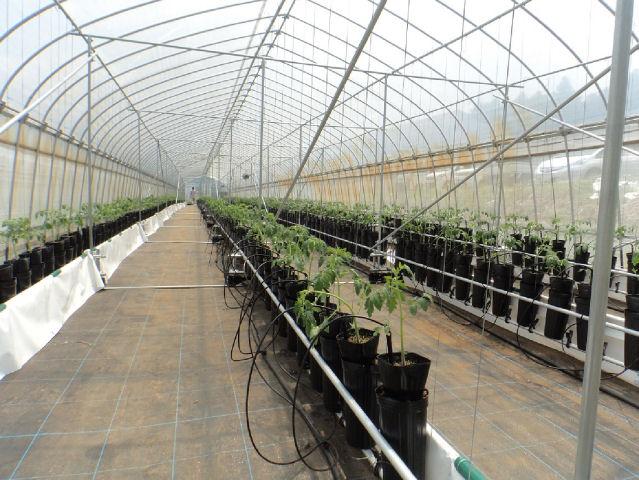 茨城で新しい施設栽培を開始
