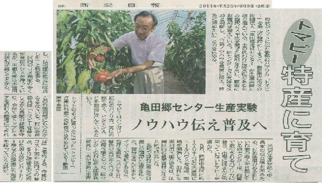 トマピー試験栽培