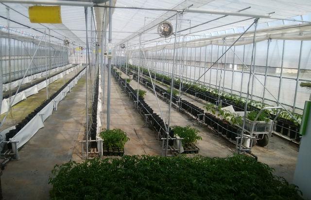 ミニトマト栽培施設